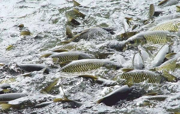 水产微生态制剂的常用方法及注意事项