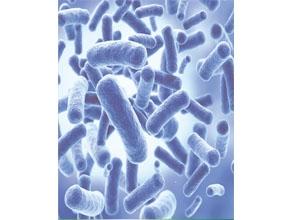 菏泽丁酸梭菌